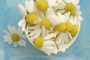 Ромашковая ванночка - хорошее средство отбеливания ногтей